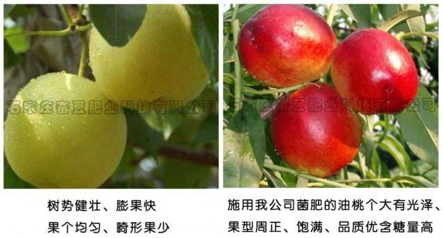 使用效果——梨、油桃