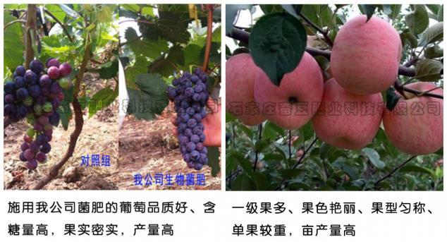 使用效果——苹果、葡萄