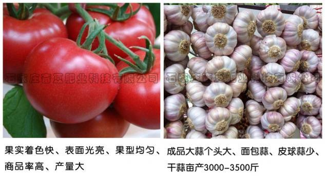 使用效果——西红柿、大蒜