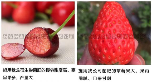 使用效果——樱桃、草莓